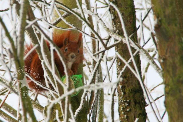 Elbe Hamburg gefroren Eis Leckerekekse-blog Eichhörnchen