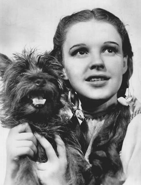 The_Wizard_of_Oz_Judy_Garland_Terry_1939