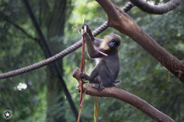 Affe bei Hagenbecks Tierpark