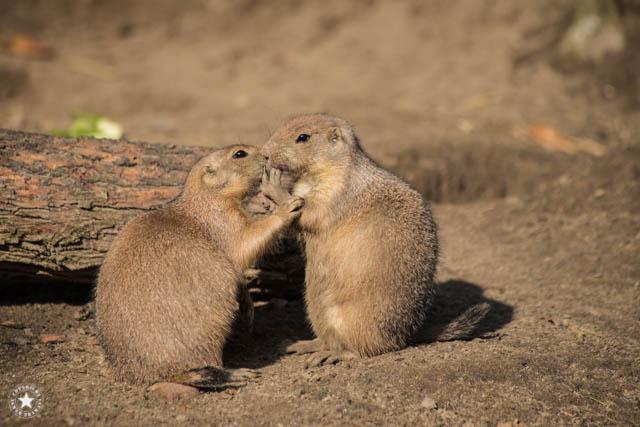 Hagenbecks Tierpark fotografieren