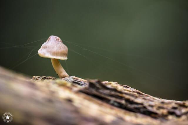 Pilz mit Spinnennetz